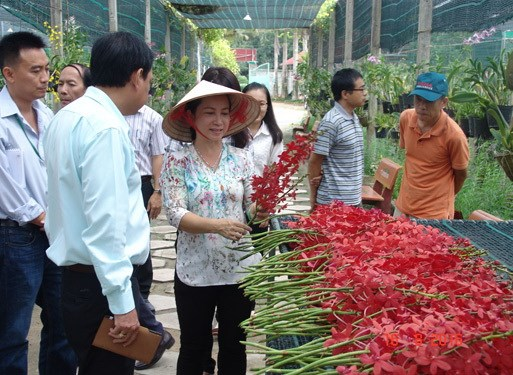 Rural districts in HCM City to develop agri-tourism hinh anh 1