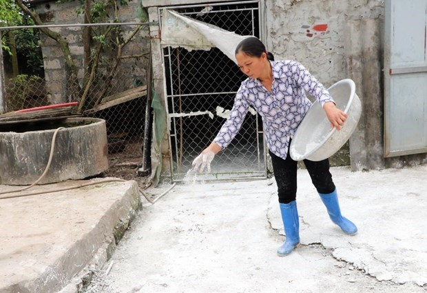 Hanoi city still struggles with African swine fever hinh anh 1