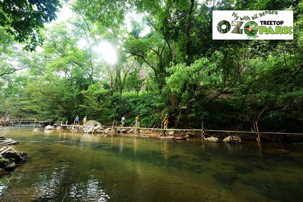 Ozo Treetop Park – new tourism product of Quang Binh hinh anh 1