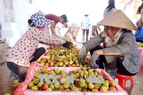 Vietnam, China to enhance trade on farm produce hinh anh 1