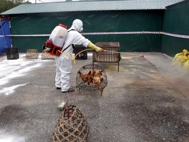 A/H5N6 avian flu outbreak reported in Lang Son hinh anh 1