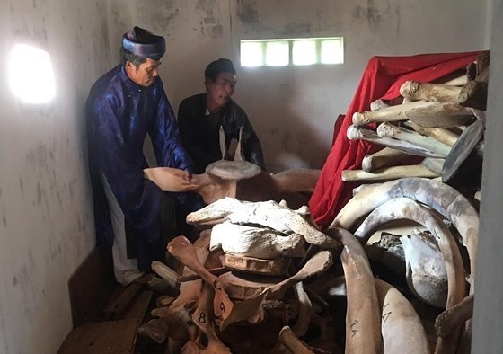 Ly Son Island to restore giant whale skeleton hinh anh 1