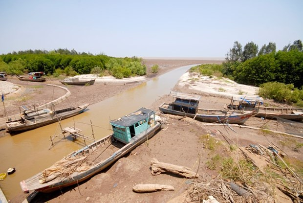 Tien Giang's coastal area manages to cope with drought hinh anh 1