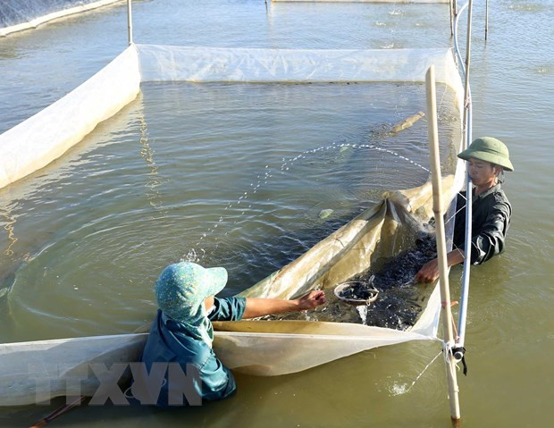 Projects to revive fishery resources in central provinces launched hinh anh 1