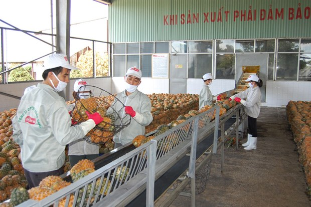 Vietnamese firms seek to adapt to official exports to China hinh anh 1