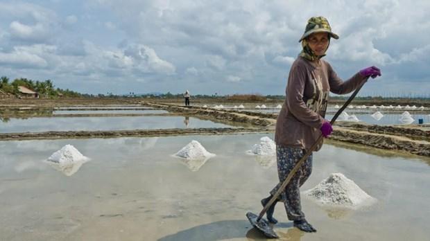 Cambodia may face salt shortage this year hinh anh 1