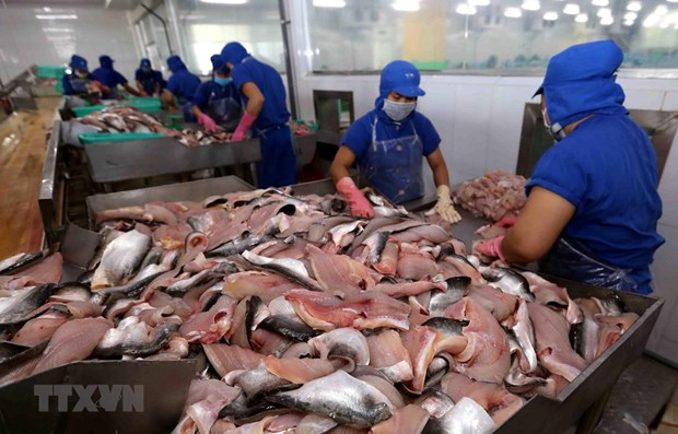 Vietnam's tra fish exports to ASEAN up 18 percent hinh anh 1