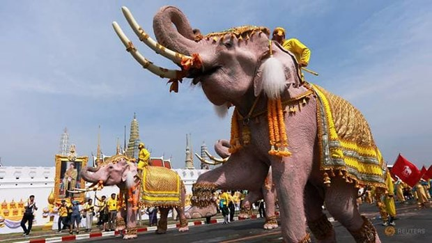 Elephant procession held to honour King of Thailand hinh anh 1