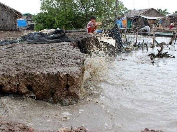 Ca Mau needs more capital for coastal dyke construction hinh anh 1