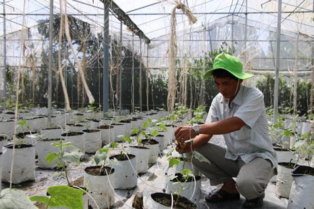 Mekong farmers make organic switch to improve business hinh anh 1