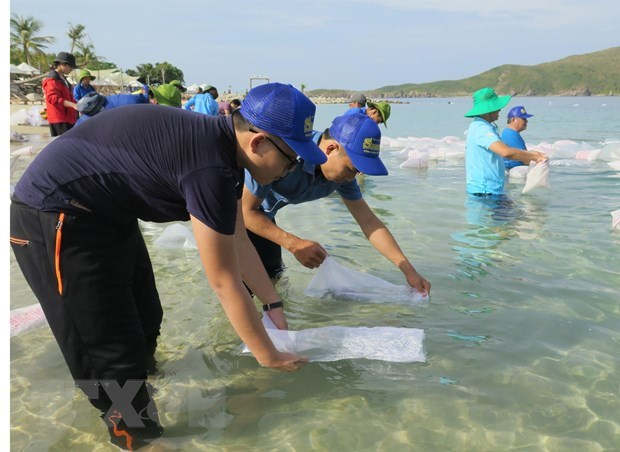 Nha Trang releases fries to regenerate aquatic resources hinh anh 1