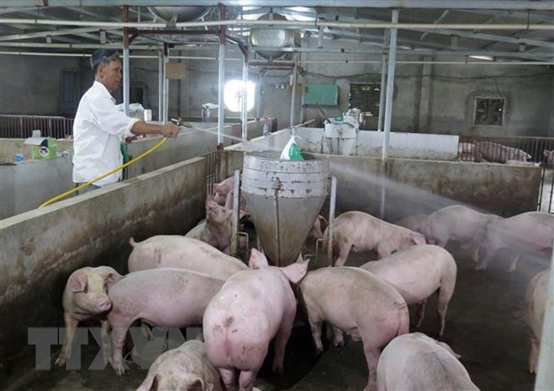Firm helps Laos build livestock information system for epidemic control hinh anh 1