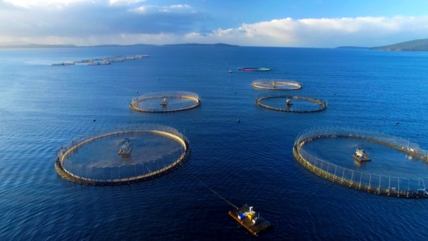 Vietnam eyes sustainable mariculture development hinh anh 1