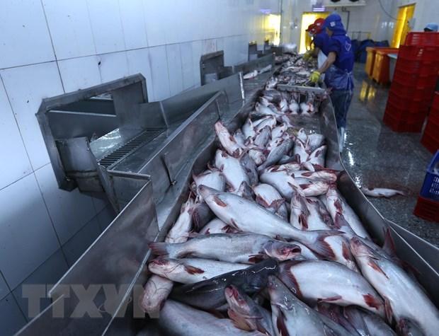 Tra fish shipments to US, China fall hinh anh 1