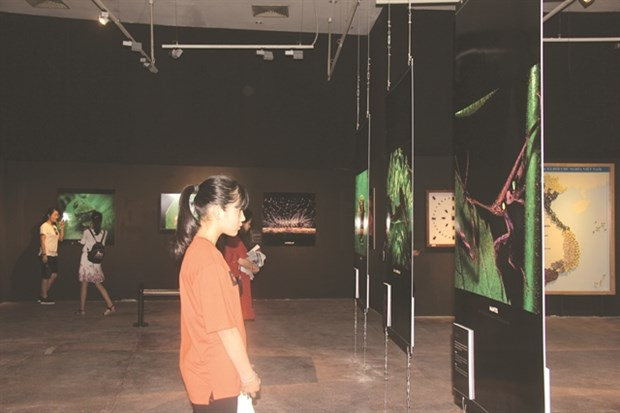 Exhibition zooms in on world of insects hinh anh 1