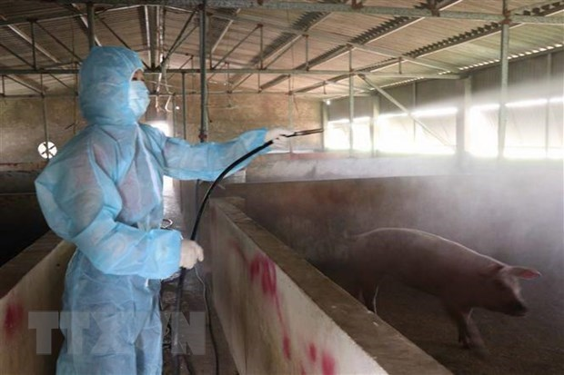Localities apply drastic measures against African Swine Fever hinh anh 1