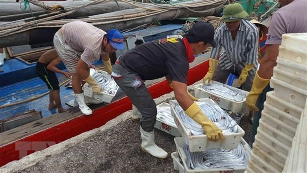 National Steering Committee on IUU Fishing Prevention set up hinh anh 1