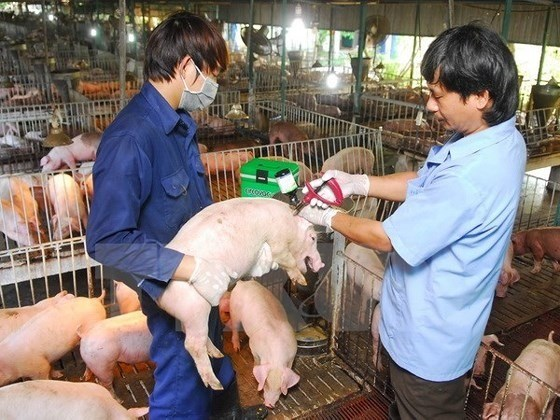 Stronger efforts required for fight against African swine fever hinh anh 1