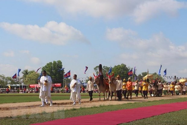 Cambodia holds traditional royal ploughing ceremony hinh anh 1