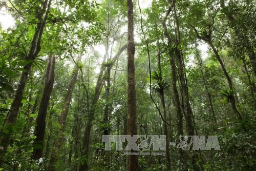 Central Highlands works toward sustainable forest development hinh anh 1