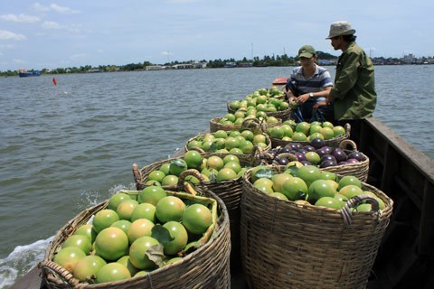 Vietnam's exports to Thailand shoot up hinh anh 1