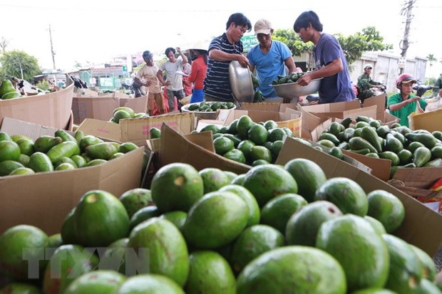 Vietnamese farm produce seeks to reach further in global market hinh anh 1