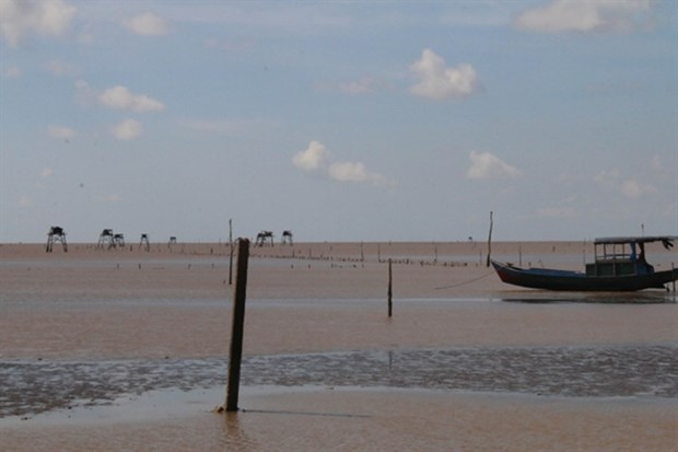 Tien Giang's coastal district expands clam farming area hinh anh 1