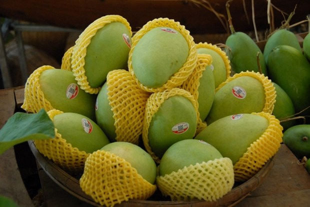 Domestic mango exporters share experience hinh anh 1