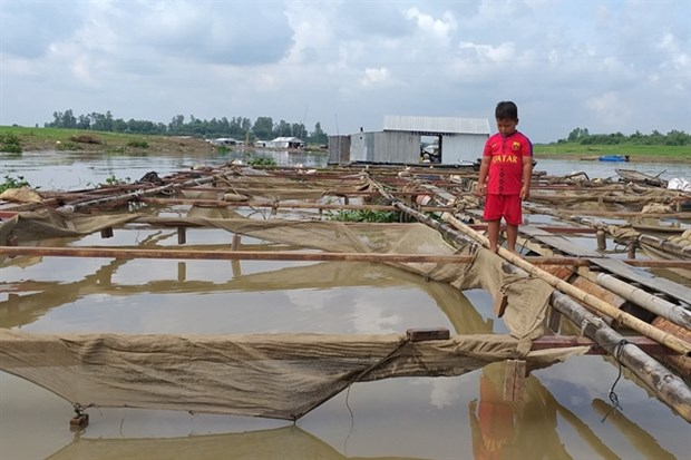 Prolonged rain, waste caused mass fish death in La Nga river hinh anh 1