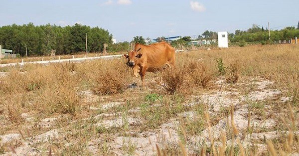 Major projects languish as speculators abandon land plots hinh anh 1