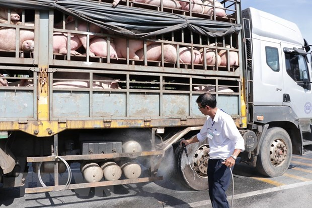 African swine fever continues to spread hinh anh 1