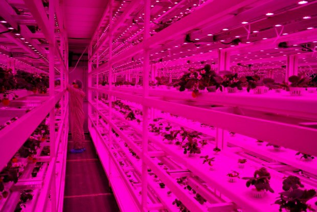 Singapore: From sky farms to lab-grown shrimp hinh anh 1