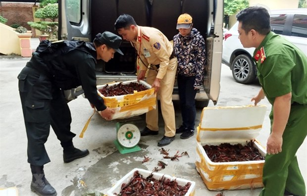 Deputy PM asks for investigation on mass sale of red-claw crawfish hinh anh 1