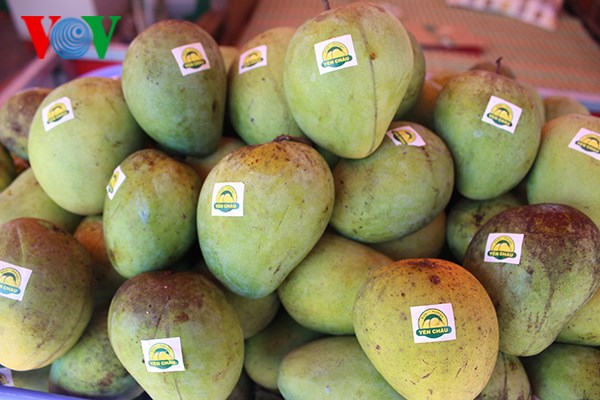 Son La mangoes exported to demanding markets hinh anh 1