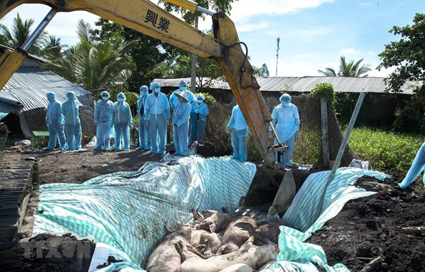 PM requests stepping up fight against African swine fever hinh anh 1