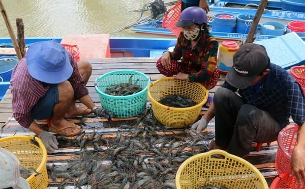 Aquatic product exports decrease in five months hinh anh 1