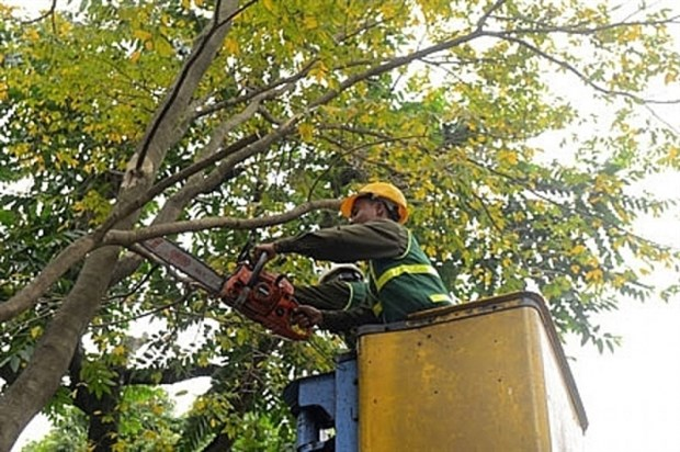 Hanoi to cut back 40,000 trees to cope with typhoons hinh anh 1
