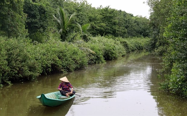 Kien Giang province recovers protective forests hinh anh 1