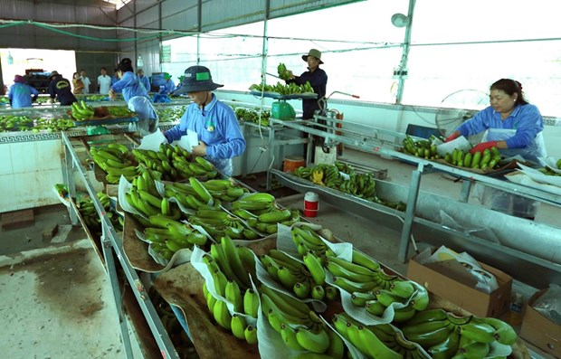 Vietnam's agricultural products facing barriers to enter Chinese market hinh anh 1