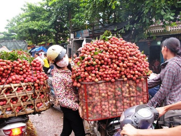 Vietnam becomes second largest exporter of lychees hinh anh 1