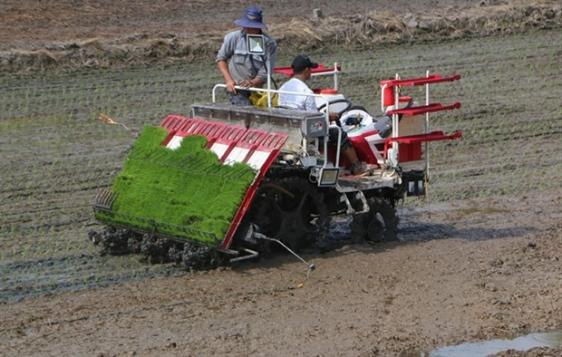 Mekong Delta embraces smart rice farming hinh anh 1