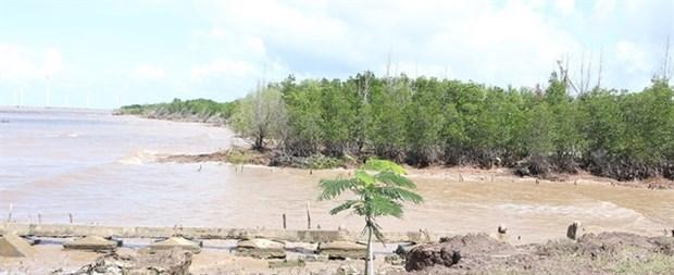 Bac Lieu struggles to protect coastal forests hinh anh 1