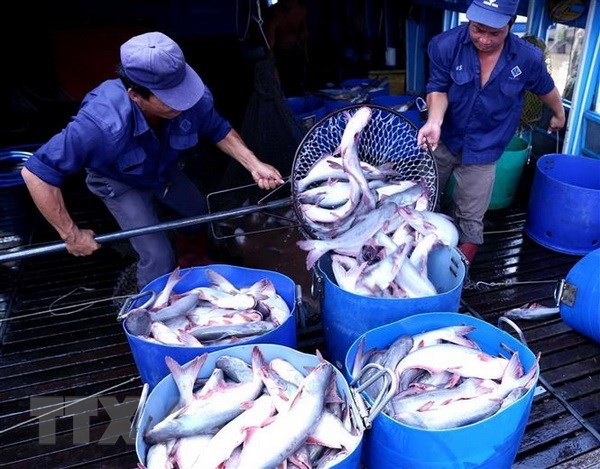 CPTPP gives great chances for Vietnam's tra fish exports hinh anh 1