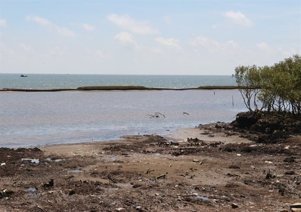 Tien Giang plans to repair geotube sea dyke hinh anh 1