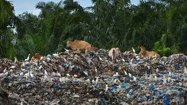 Indonesia returns five containers of trash to US hinh anh 1