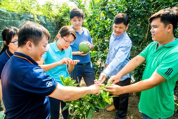 Bayer Agricademy trains fruit, coffee farmers hinh anh 1
