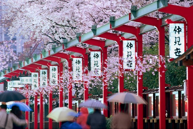 Vietnamese visitors to Japan up 41.6 percent in May hinh anh 1
