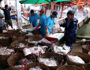 Quang Tri works hard to fight illegal fishing hinh anh 1