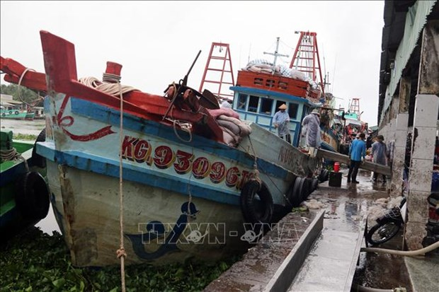 More drastic measures needed to erase yellow card on fisheries: Deputy PM hinh anh 1