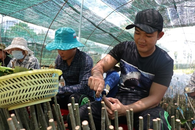 Mekong Delta to have quality breed sources for fishery, fruit and rice hinh anh 1